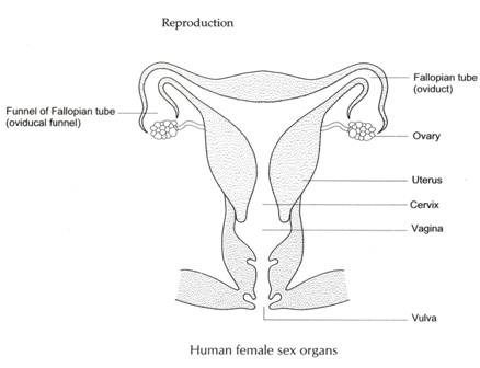 Sex prone photo Humanfemale