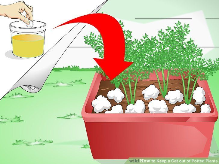 Zils M. reccomend Cat peeing in plants