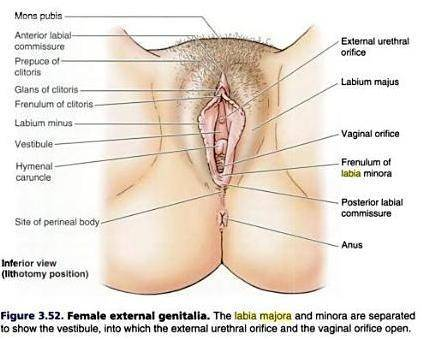 Bisex femdom tgp