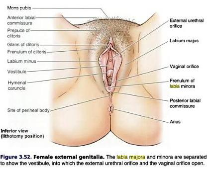 best of Vagina About female