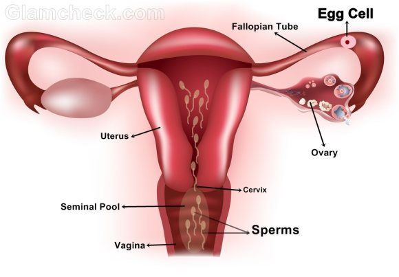best of Pregnancy Sperm for