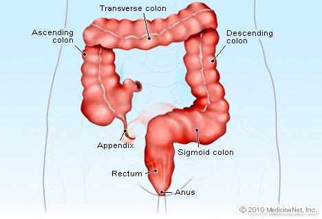 Colonel reccomend Anus human organ