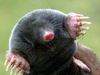 Han S. reccomend Mole on anus