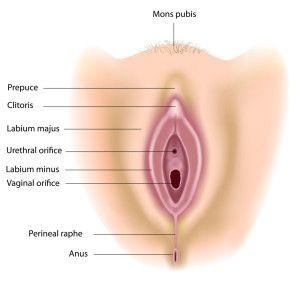 Cake reccomend About female vagina