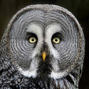 Versace reccomend An owls facial disc