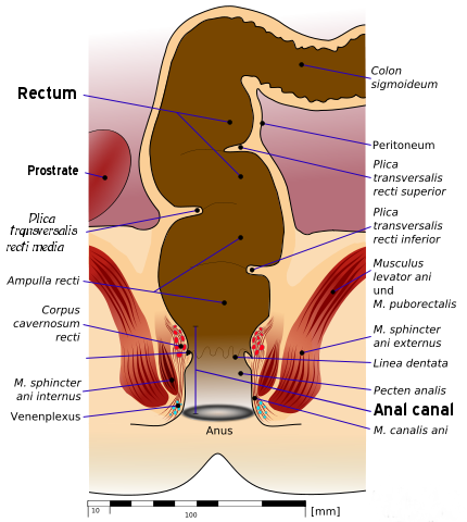 Alien reccomend Anatomy of deep anal fisting