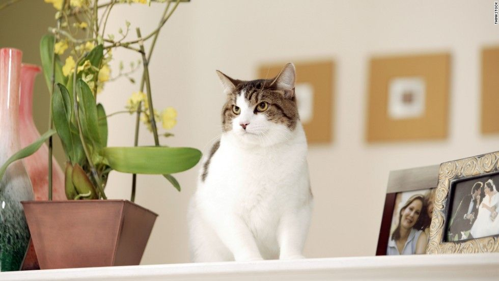 best of Peeing plants Cat in