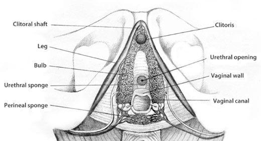 best of Real Clitoris stimulation