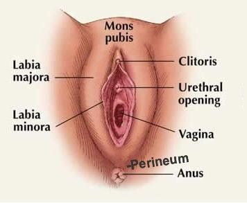 best of Licking Guide to clit