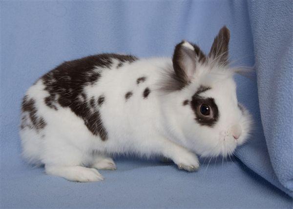 Spunk bunny