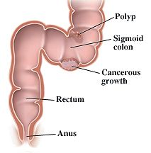 Snake reccomend The rectum and anus