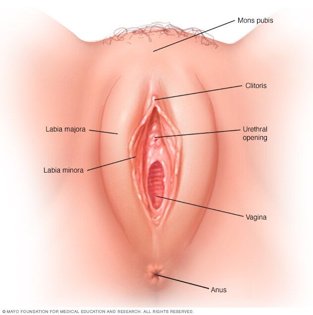 Panties Porn Girls